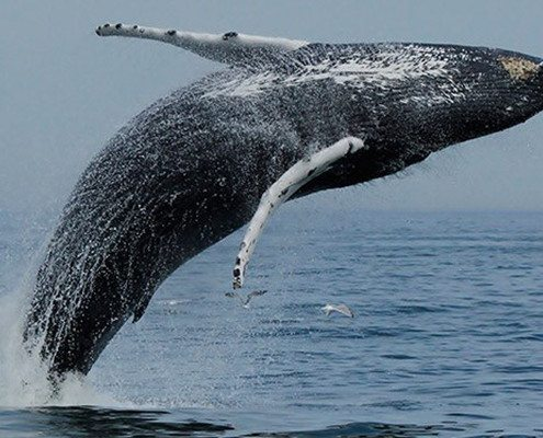 VA Beach Boat Tours - Whale Watching