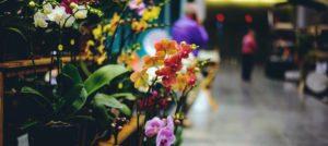 Virginia Beach events - Virginia Flower and Garden Expo