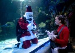 Virginia Beach Hotels - Oceanfront   Santa at Aquarium
