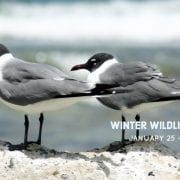 Winter Wildlife Festival | Virginia Beach Hotels - Oceanfront