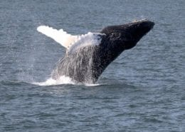 Virginia Beach Hotels - Oceanfront - whale tours
