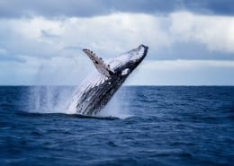 Whale Watching Tours in Virginia Beach